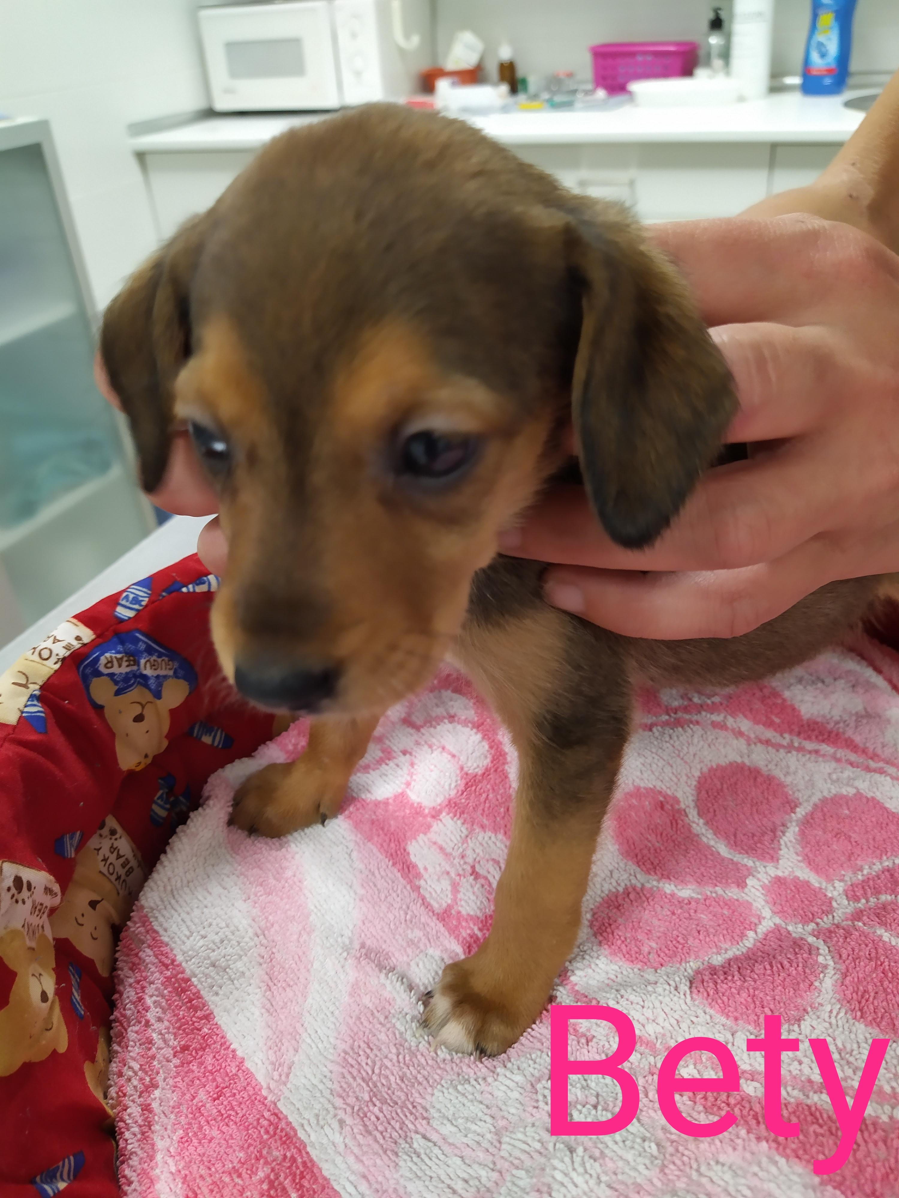 BETY perra en adopción en la protectora de jaca