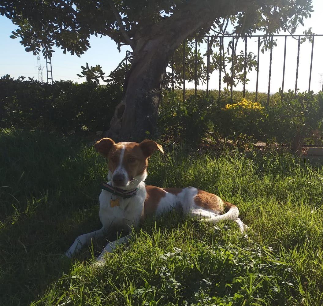 ipas perro en adopcion en la protectora de animales de jaca