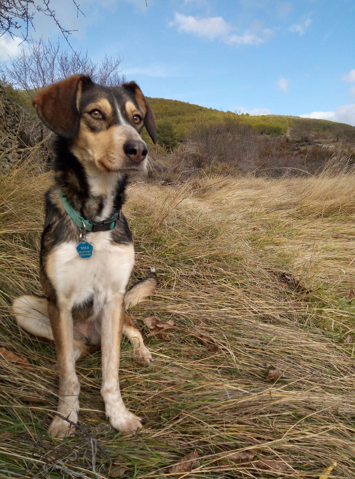 Bora antigua Agata feb20 en adopción en la protectora de jaca para animales abandonados APAP Asociación protectora de animales pirineos de jaca perro en adopción