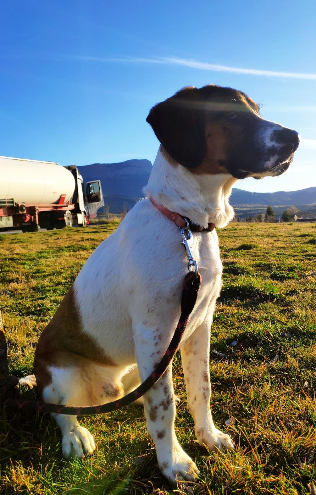 harry feb20 perro en adopción en la protectora de Jaca potada