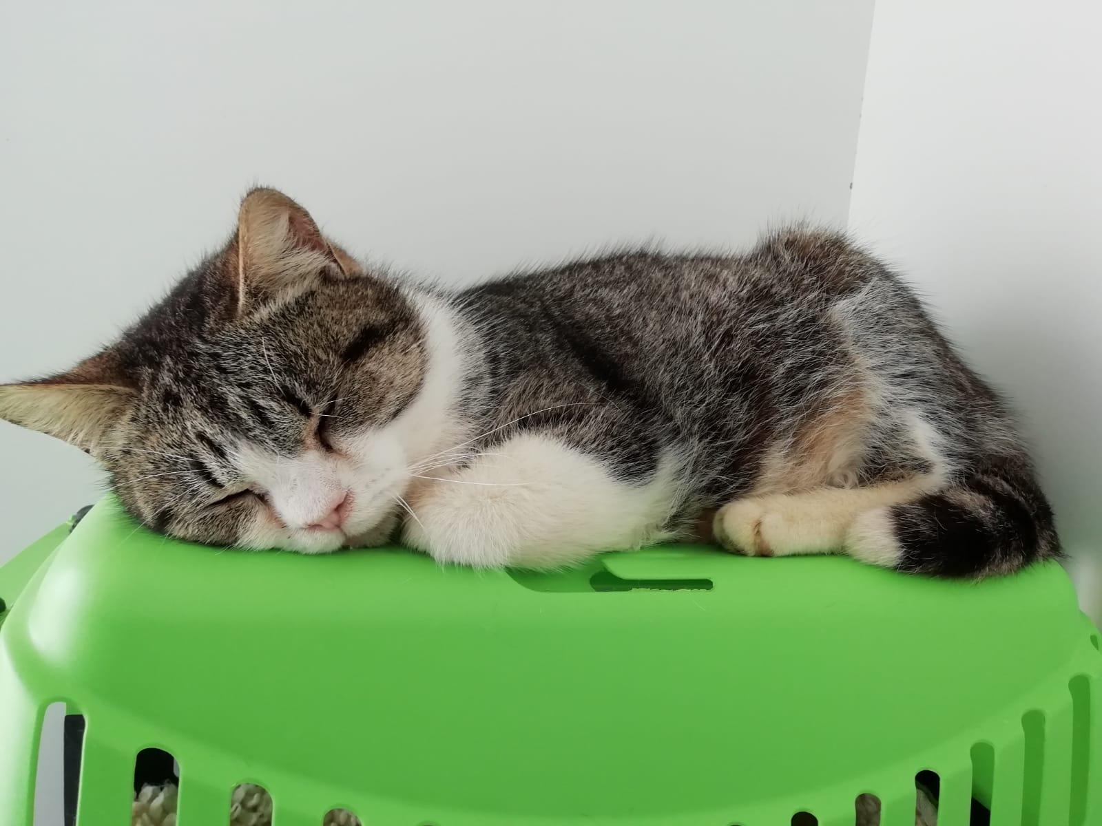 cherri gato feb20 portada en adopción en la protectora para animales abandonados de jaca APAP2