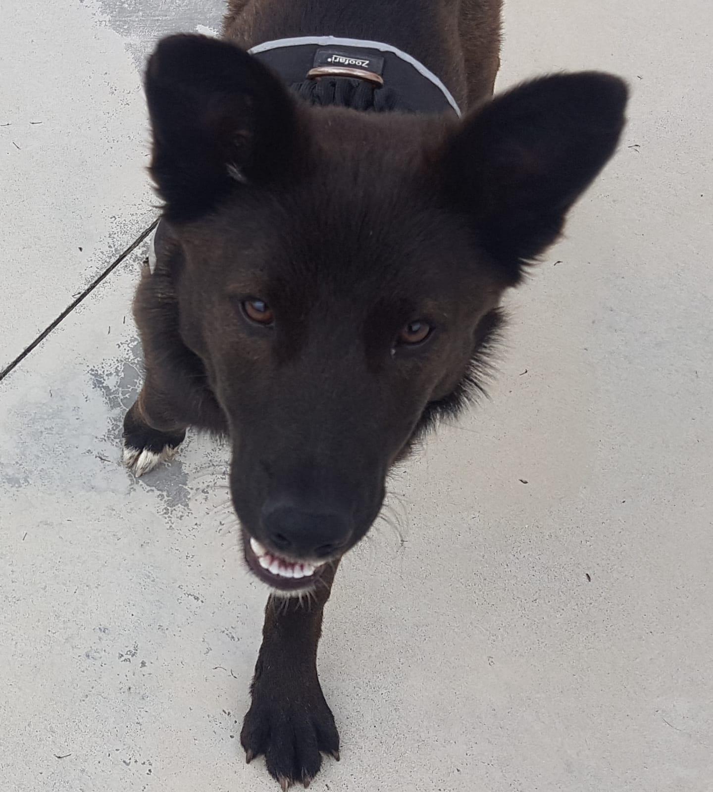 Mai perro en adopcion en la protectora de animales de jaca abr20