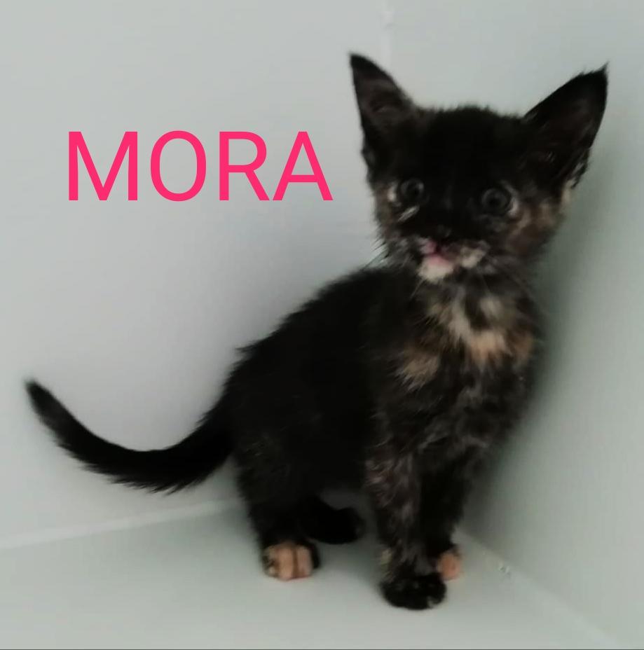 MORA gato cachorro en adopción en la protectora de animales de Jaca may20