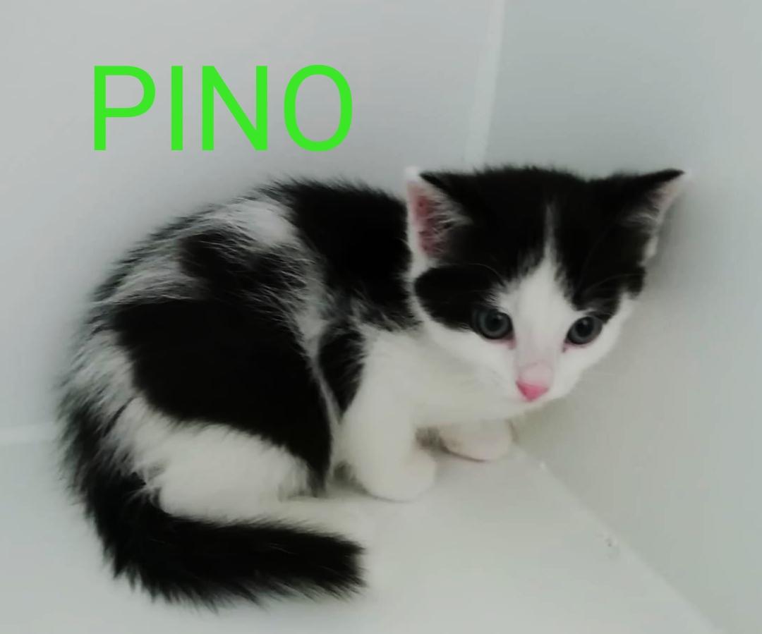 pino gato cachorro en adopción en la protectora de animales de Jaca may20