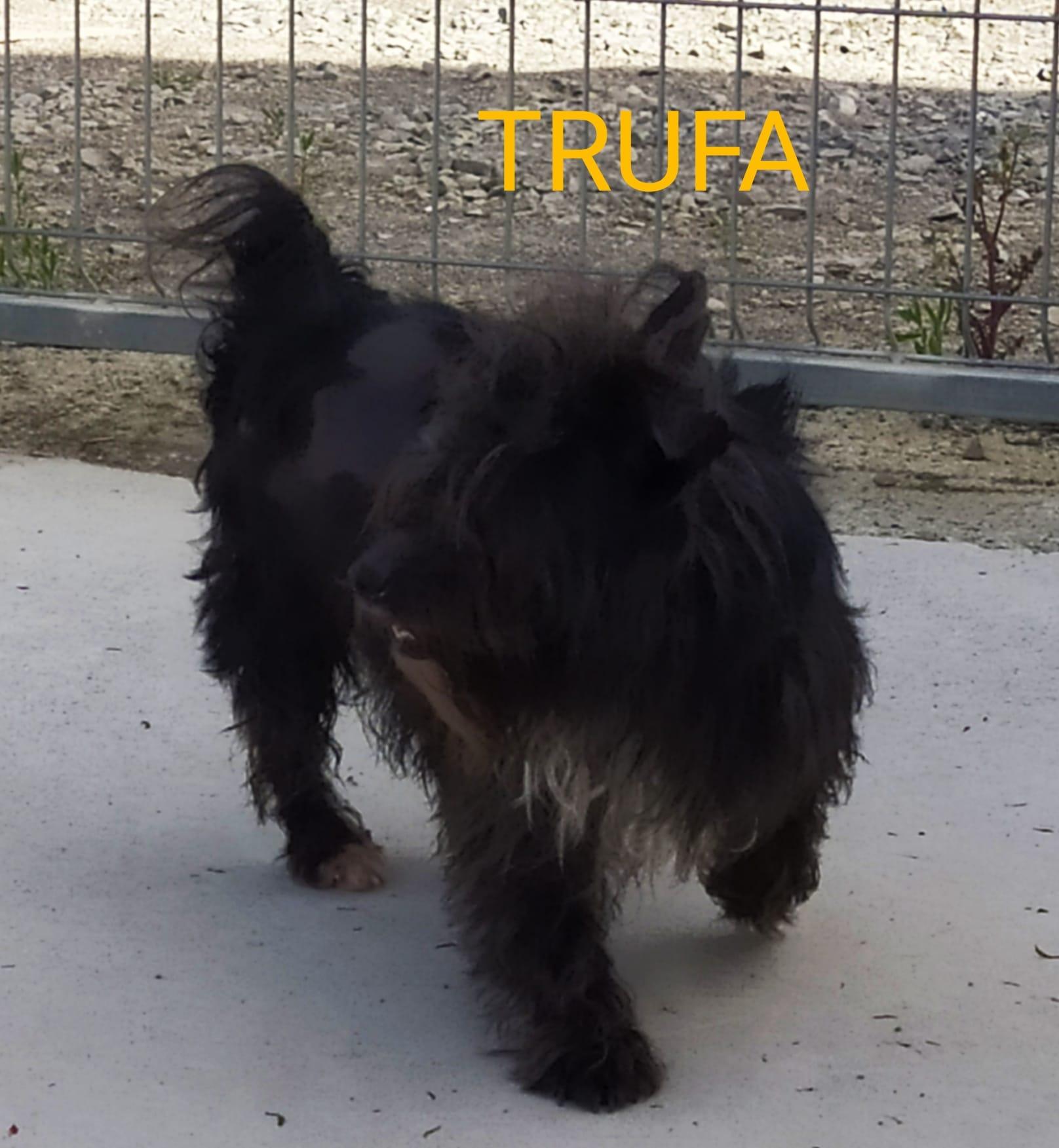 TRUFA perro en adopción en la protectora de animales de jaca may20