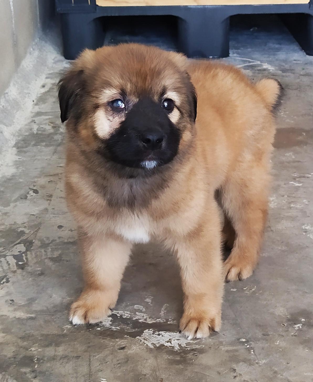 perro cachorro en adopción en la protectora de animales de jaca