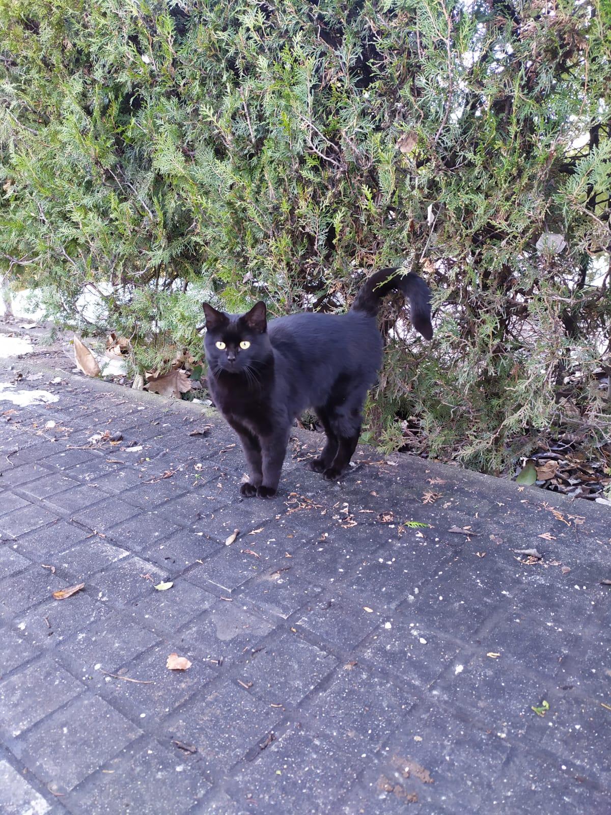 gato joven en adopción en la protectora para animales abandonados de jaca ene21 portada