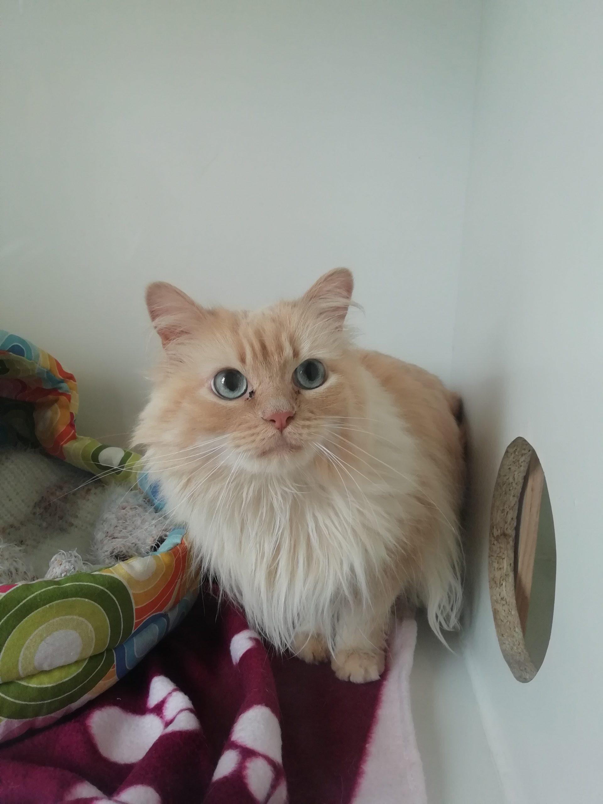 MIKE G009 gato en adopción en la protectora para animales abandonados de jaca 2021