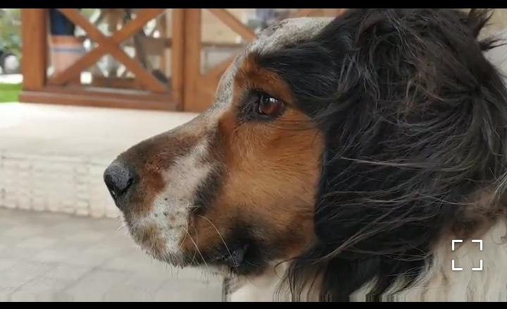 fufu perro en adopción en la protectora de animales abandonados de jaca