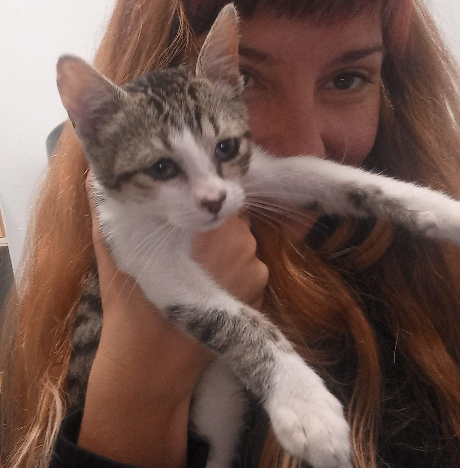 roneo gato cachorro joven en adopcion en la protectora para animales abandonados de jaca huesca 2021