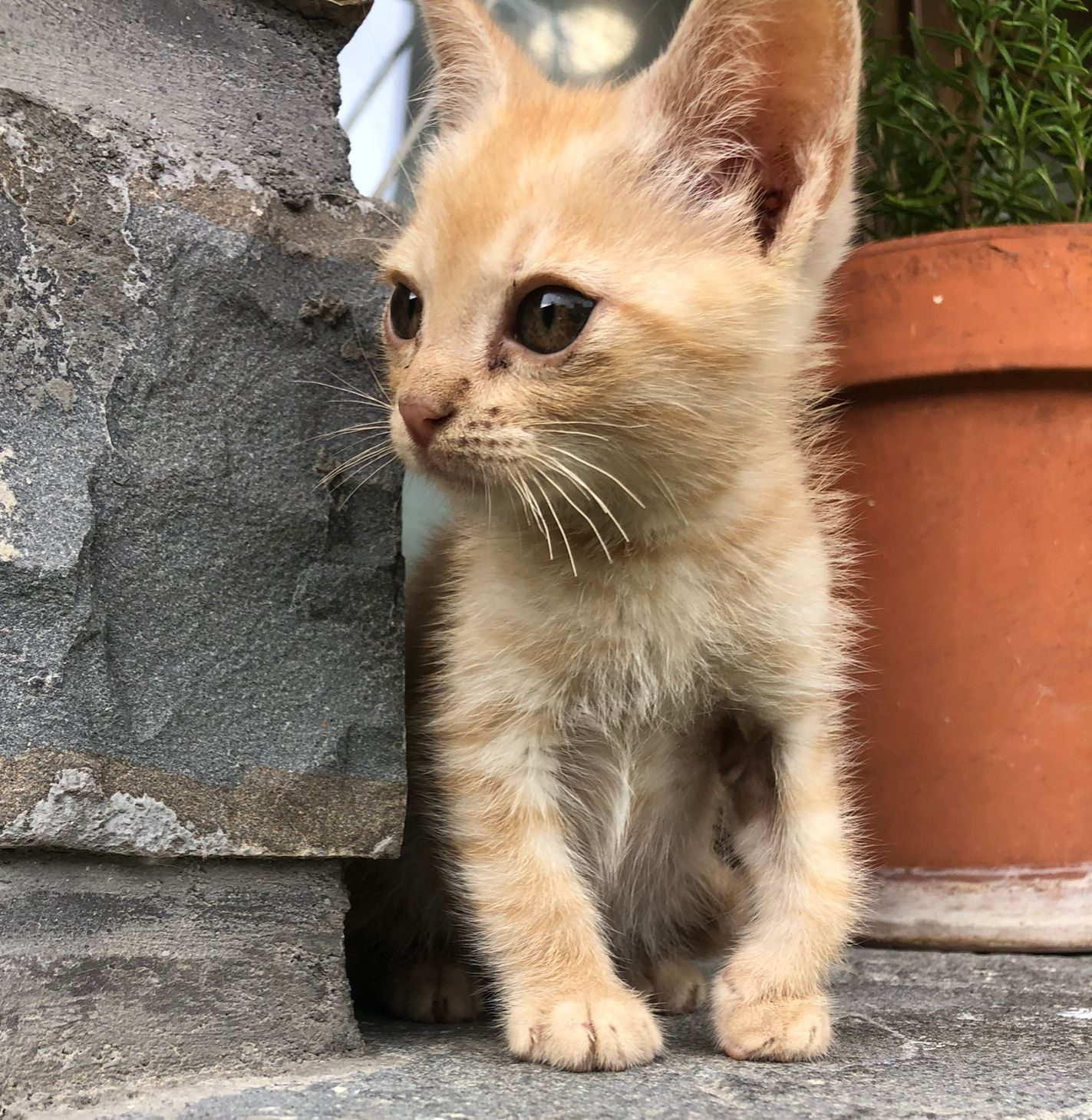natos antes mia gato bebé en adopción en la protectora de animales de Jaca huesca 2021